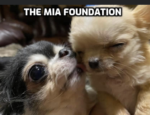 The Mia Foundation Part 2 – The Experience